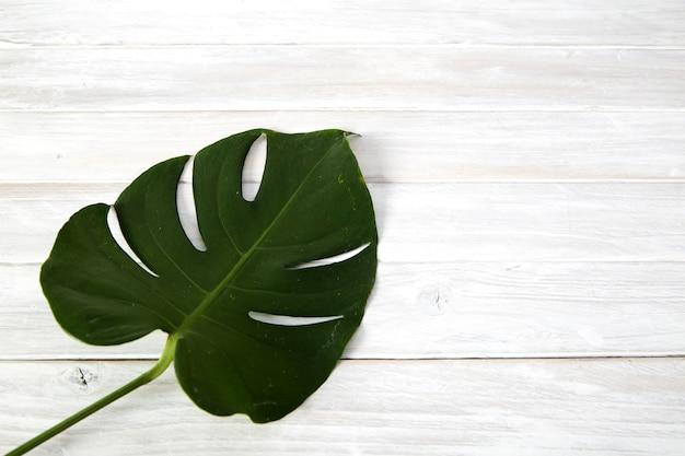 Foglie verdi di monstera su fondo di legno bianco