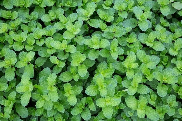 Foglie verdi di piante.