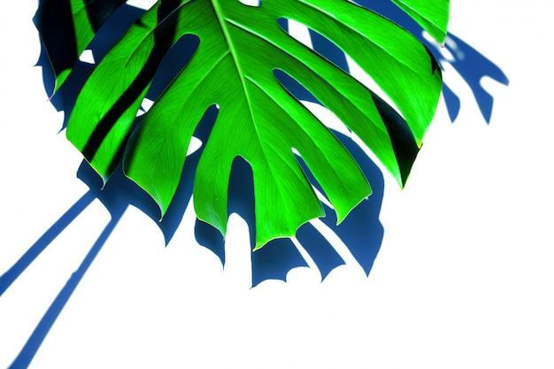 Foglie verdi differenti differenti bianche di struttura