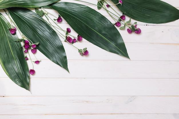 Foglie verdi e fiori viola