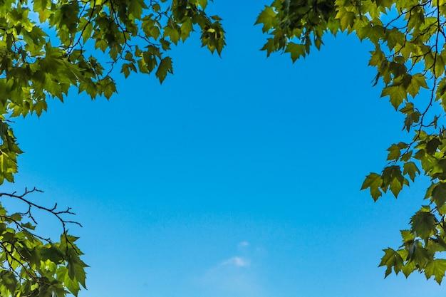 Foglie verdi e sole