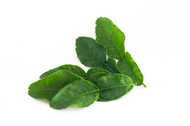 Foglie verdi fresche della calce del kaffir isolate su bianco, ingradient per l'alimento dell'asia