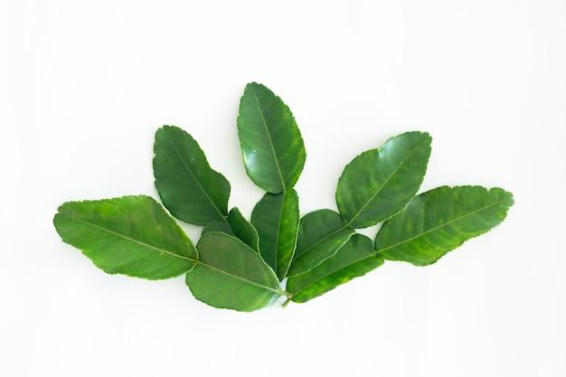 Foglie verdi fresche della calce del kaffir isolate su fondo bianco, ingradient per il cibo dell'asia
