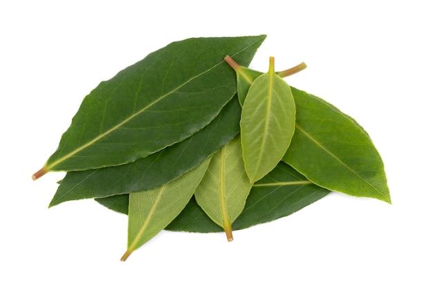 Foglie verdi fresche della foglia di alloro isolate su bianco. laurus isolato.