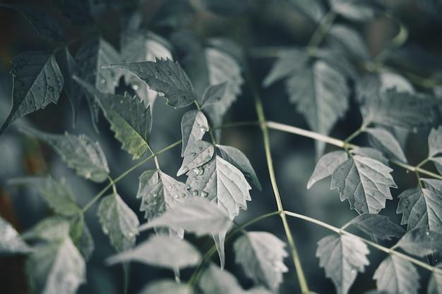 Foglie verdi fresche dopo la pioggia