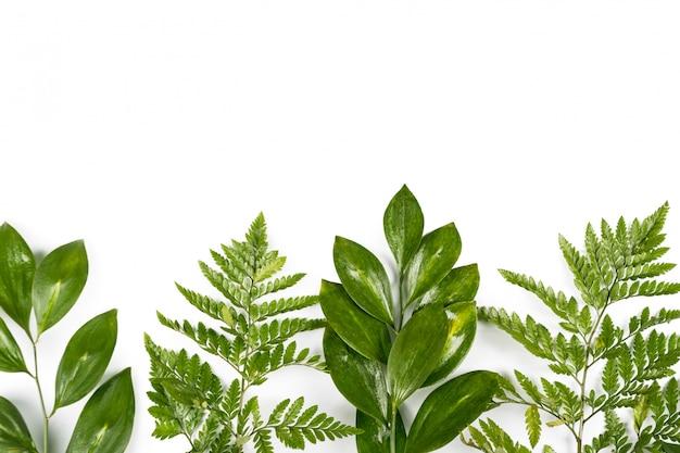 Foglie verdi fresche su fondo bianco. vista piana, vista dall'alto, copyspace. design lussureggiante, concetto lussureggiante primavera ed estate