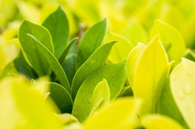 Foglie verdi, giallo chiaro con sfocatura dello sfondo a motivi geometrici.