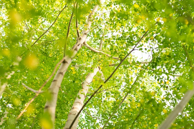 Foglie verdi natura