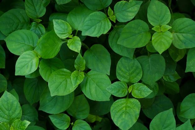 Foglie verdi nel fondo di tono scuro