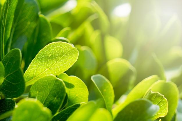 Foglie verdi nel giardino durante i caldi mesi estivi con il sole.