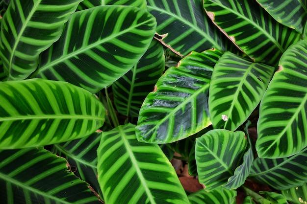 Foglie verdi nella foresta pluviale tropicale