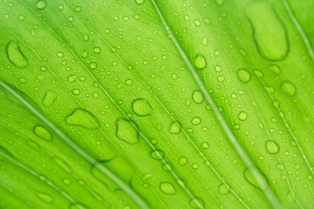 Foglie verdi nella stagione delle piogge