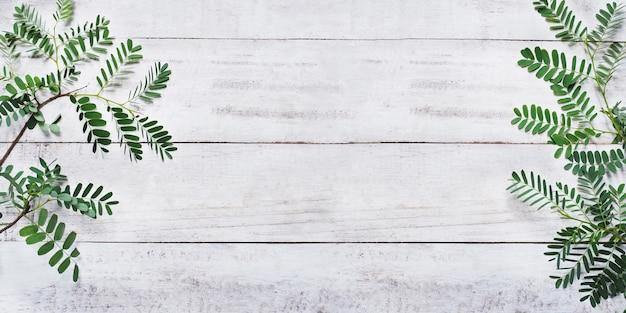 Foglie verdi su legno bianco vintage