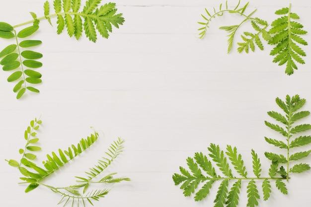 Foglie verdi su legno bianco