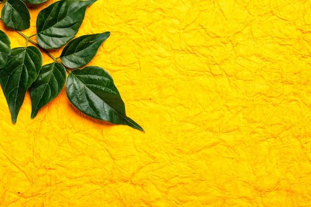 Foglie verdi su sfondo giallo con spazio di copia