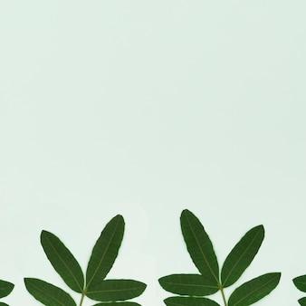 Foglie verdi su sfondo verde chiaro
