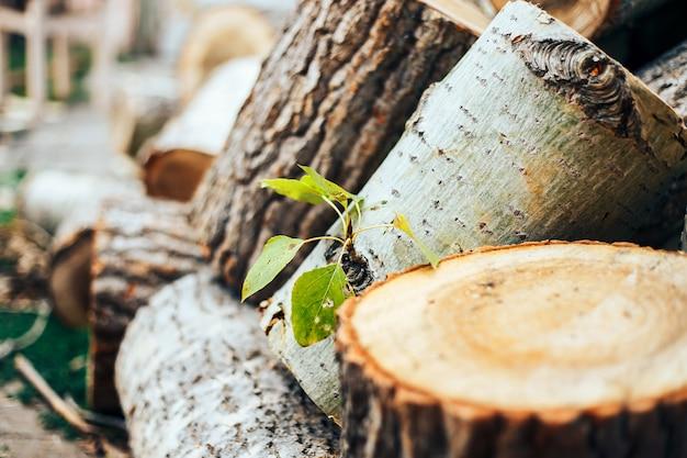 Foglie verdi su un albero abbattuto su un cuneo, protezione della natura