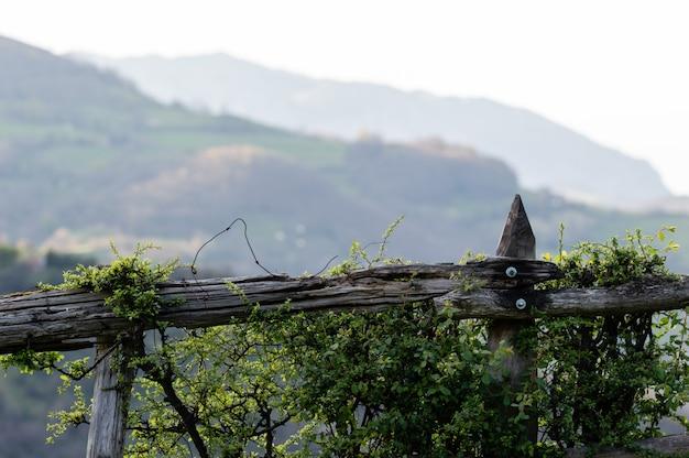 Foglie verdi su una recinzione sgangherata giardino, con uno sfondo sfocato.