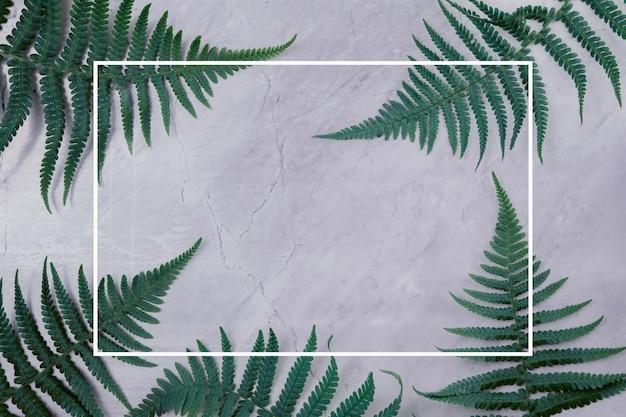 Foglie verdi su uno sfondo di marmo