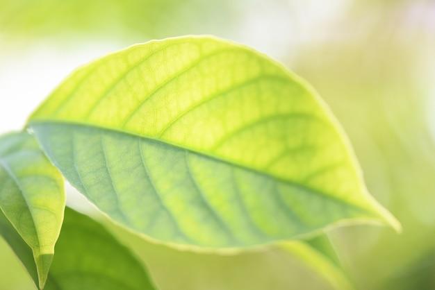 Foglie verdi sull'albero con il fuoco molle di luce solare
