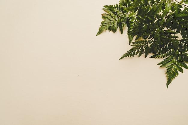 Foglie verdi tropicali