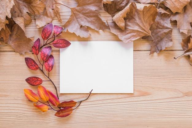 Foglio bianco tra le foglie
