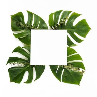Foglio di carta su foglie verdi