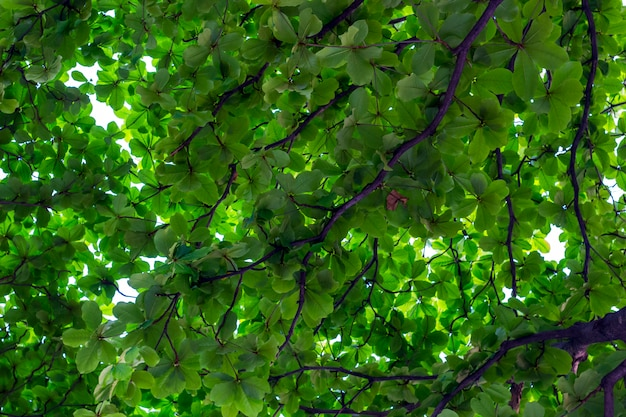 Fondo astratto della foglia e del ramo verdi nel giorno soleggiato al giardino.