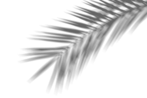 Fondo astratto di estate delle foglie di palma esotiche dell'ombra su una parete bianca. bianco e nero per sovrapporre una foto