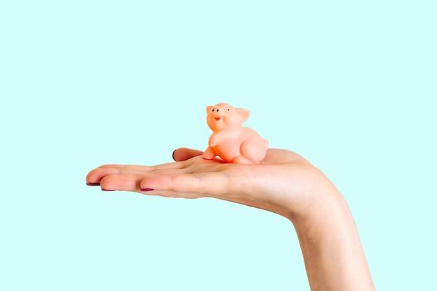 Fondo blu del maiale della tenuta della mano isolato maiale 2019 del nuovo anno