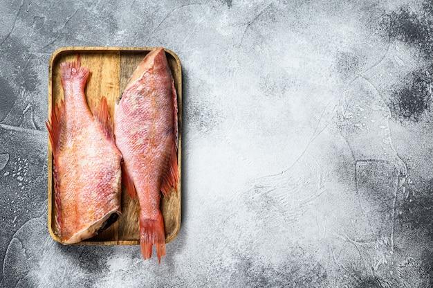 Fondo crudo del pesce persico del mar rosso