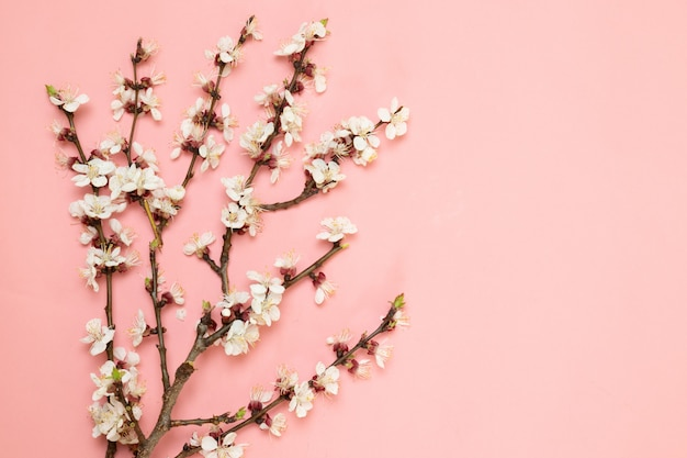 Fondo dei fiori di rosa del modello dei rami del fiore della primavera