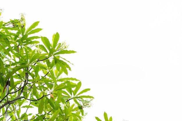 Fondo del cielo bianco delle foglie verdi di giallo