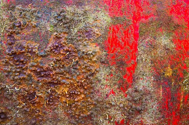 Fondo del guscio della barca di lerciume in rosso ed arrugginito