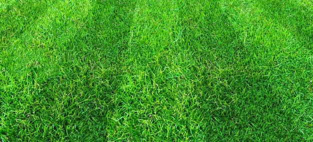 Fondo del modello del campo di erba verde per gli sport di calcio e di calcio. priorità bassa di struttura del prato verde.