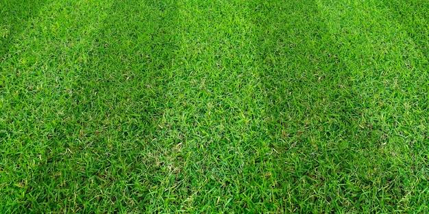 Fondo del modello del campo di erba verde per gli sport di calcio e di calcio.