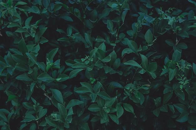 Fondo del modello delle foglie verdi. distesi. natura sfondo tono verde scuro