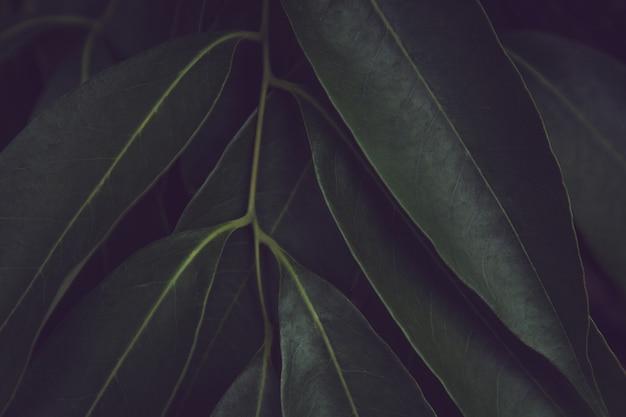Fondo del modello delle foglie verdi. foglie di patata dolce natura sfondo tono verde scuro.
