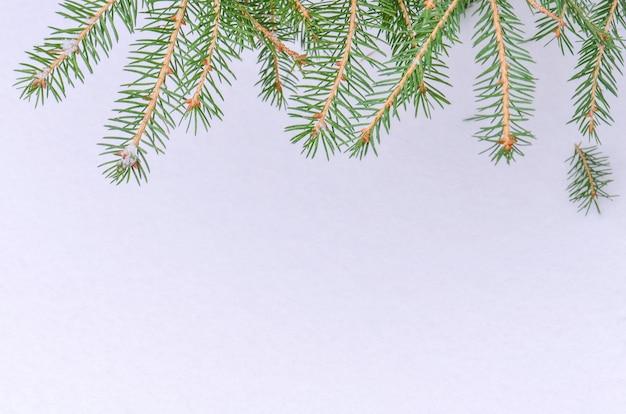 Fondo del ramo di albero dell'abete della neve di natale