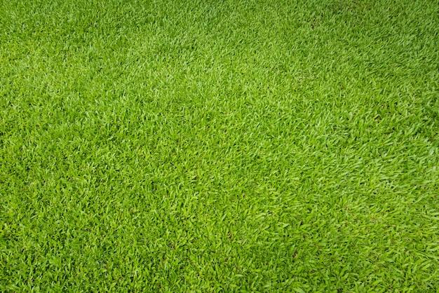 Fondo dell'erba verde e strutturato, vista superiore e dettaglio del pavimento del tappeto erboso al campo di calcio