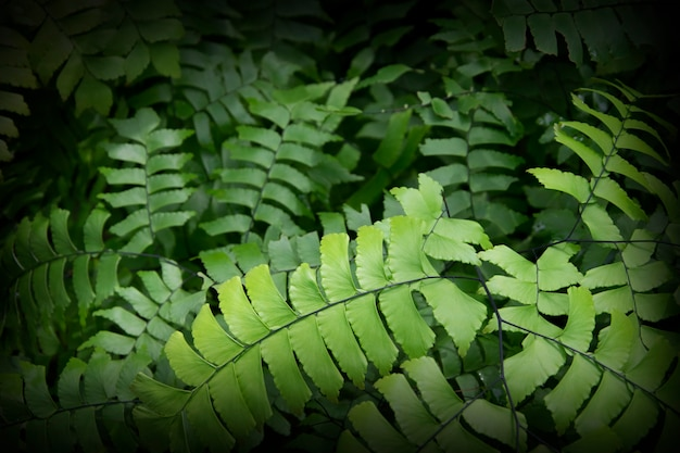 Fondo dell'estratto della natura all'aperto della foresta delle foglie delle felci