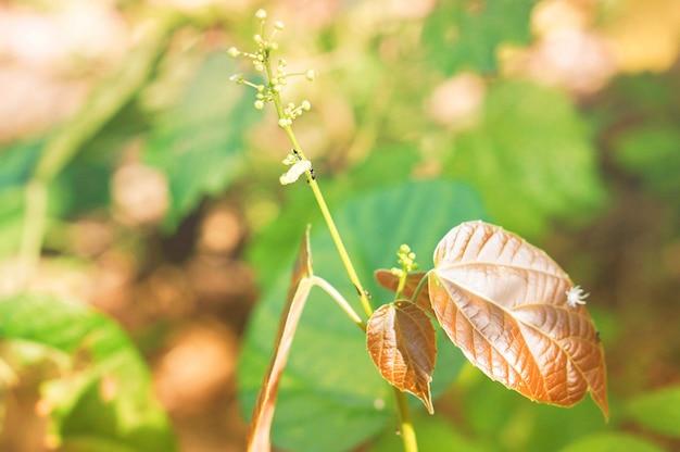 Fondo della carta da parati della natura del fiore e delle foglie dell'erba della primavera