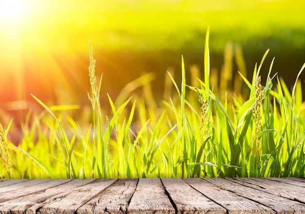 Fondo della natura con erba verde al tramonto e piano d'appoggio di legno