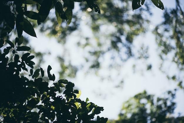 Fondo della vista della natura con la foglia verde sul fondo vago della pianta, giardino con lo spazio della copia, ecologia, concetto fresco della carta da parati.