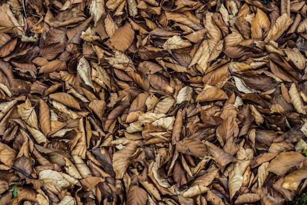Fondo delle foglie di autunno cadute asciutte