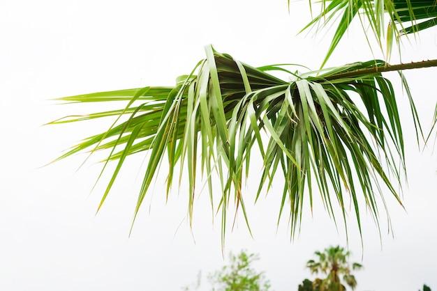 Fondo delle foglie di palma con luce solare per progettazione, spazio della copia di progettazione di viaggio di festa