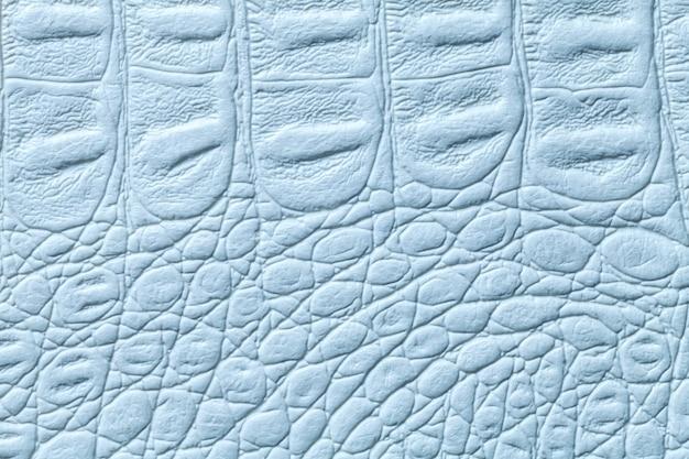 Fondo di cuoio blu-chiaro di struttura, primo piano. pelle di rettile, macro.
