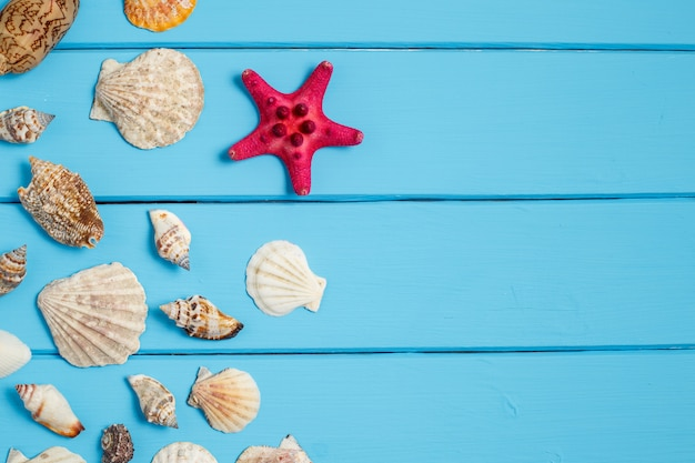 Fondo di estate, conchiglie su fondo di legno blu