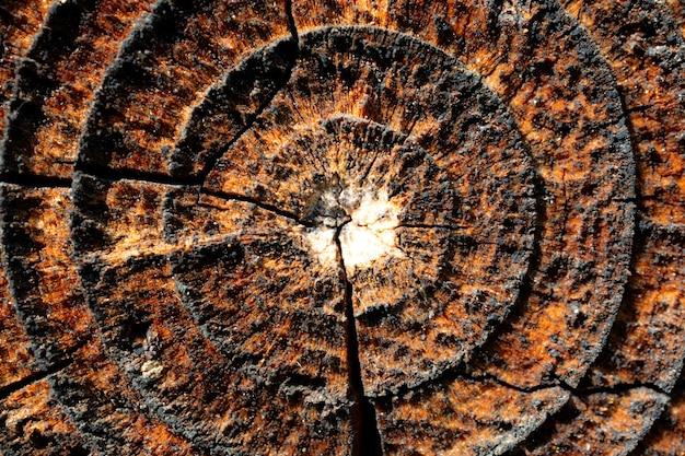 Fondo di legno della fetta di struttura del cerchio