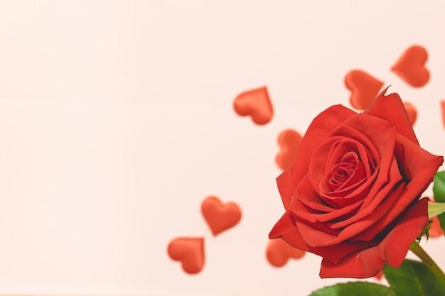 Fondo di san valentino, rosa rossa con i cuori rossi su fondo rosa, per la carta e il fondo di nozze